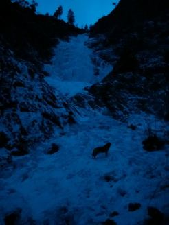 Honeyman Falls (Jan 6). Dog for scale :-)
